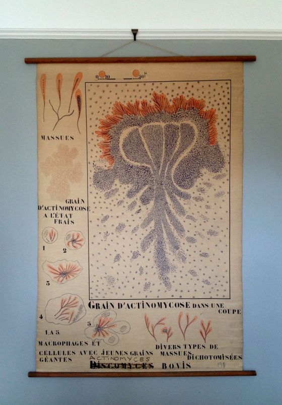 Vintage French biology department wall hanging (date unknown).
